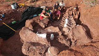 فريق خوسي لويس كارباليدو خلال آعمال البحث واستخراج بقايا الديناصور في الأرجنتين