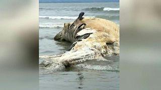 جثة حوت ملقاة على شاطئ بالي في إندونيسيا