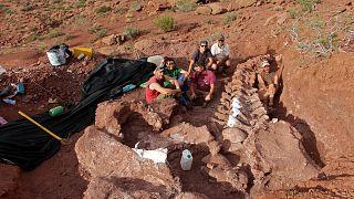 Bugüne kadar keşfedilenlerin en büyüğü olduğu sanılan dinozor fosili