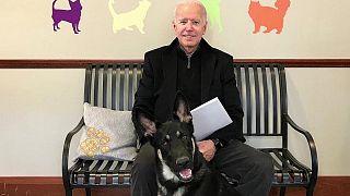 """الرئيس الأمريكي جو بايدن وكلبه المتبنى """"ميجور"""""""