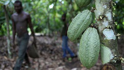 """Bruxelles et Abidjan pensent au """"cacao durable"""""""
