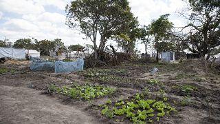 Mozambique : le cyclone Éloïse épargne la ville de Beira