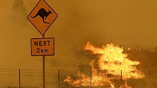 ausztrál erdőtűz