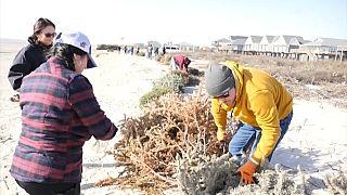 Voluntarios construyendo dunas en Surfside Beach, Texas