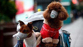 Maskeli evcil köpekler