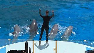 Шоу с дельфинами во Франции