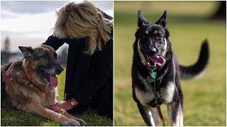 كلبا جو بايدن وزوجته في البيت الأبيض