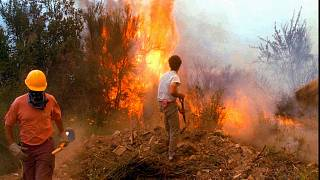 Argentina forest fire (file photo)