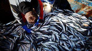 İngiliz balıkçı