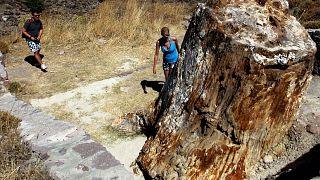 Midilli'deki fosilleşmiş ağaç ormanı/Arşiv