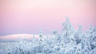 Snow covered trees are seen in Kittila, Finnish Lapland, Wednesday, Jan. 13, 2021.