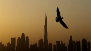 A seagull flies pass the view of city skyline and the world tallest tower, Burj Khalifa, in Dubai, United Arab Emirates, Friday, Jan.29, 2021.