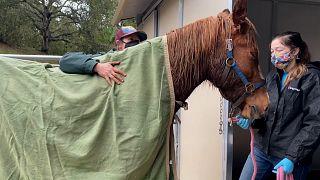 Pferderettung: Befreiung nach 18 Stunden im Schlamm