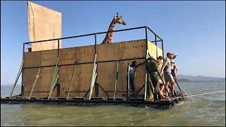 Giraffe auf dem Floß