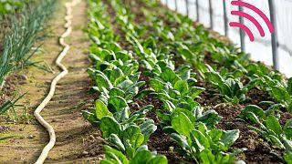 Le piante potrebbero essere utilizzate per rilevare inquinamento e siccità in arrivo
