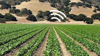استخدام النباتات للكشف عن التلوث والجفاف