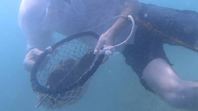 Treasures and tradition - find out how pearl diving in Dubai still uses traditional methods