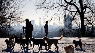 تجوال الكلاب الأليفة في لندن