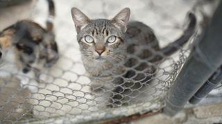 كوريا الجنوبية تجري اختبارات كوفيد-19 للحيوانات الأليفة