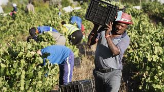 South African wineries struggle following alcohol bans