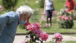 Le plaisir de sentir l'odeur d'une rose, comme ici dans un parc de Rome, en Italie, le 19 mai 2020