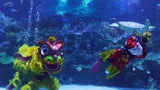 غواصون ماليزيون يؤدون رقصة الأسد الصينية التقليدية تحت الماء احتفالاً برأس السنة القمرية الجديدة - كوالالمبور 11 فبراير 2021
