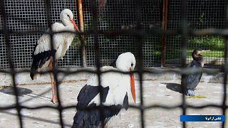 باغ پرندگان قم