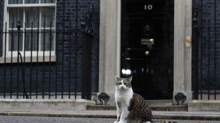 القط لاري أمام مقر رئاسة الوزارء البريطانية