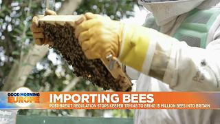 Bee keeer inspecting his hive in Kent, UK