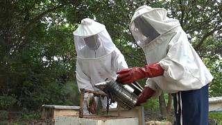 تربية النحل تثير ضجة في ساحل العاج