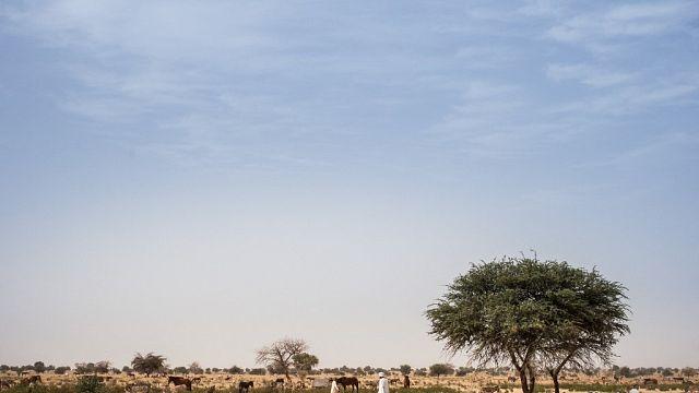 Tchad : au moins 35 morts dans des violences entre éleveurs et cultivateurs