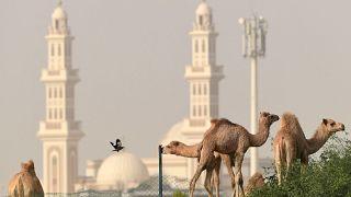 جمال ترعى في مدينة دبي الإماراتية