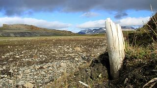 Photo obtenue le 17 février 2021 par le magazine Nature montrant une défense de mammouth laineux émergeant du pergélisol sur l'île Wrangel, dans le nord-est de la Sibérie