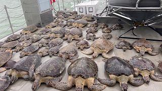 Texas recolhe tartarugas marinhas para as proteger do frio intenso