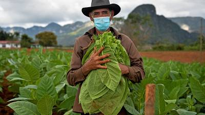 Eduardo Hernandez, restaurant owner and tobacco cultivator, works his land in Vinales, Cuba