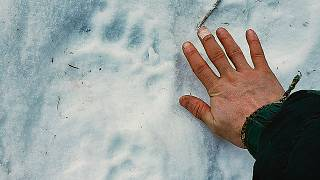 Alaska'da dışarıdaki bir tuvaleti kullanan kadına ayı saldırdı