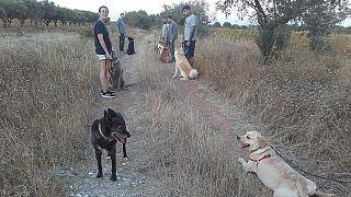 Собачья жизнь во время локдауна