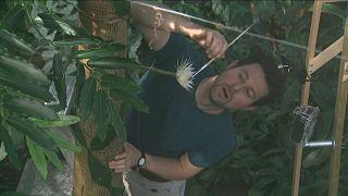 Százszorszép kaktusz virágzott ki Cambridge-ben