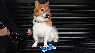Britischer Hund mit abgelaufenem EU-Haustierausweis
