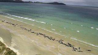 نفوق أسماك على ساحل نيوزيلندا. 2018/11/25