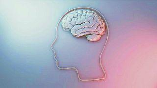 İnsan beyni, temsili