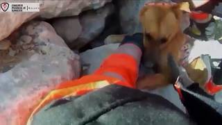 Spain dog rescue
