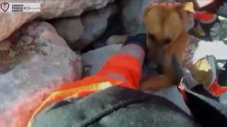 Kövek közé szorult kutyát mentettek a tűzoltók Malagán