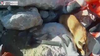 Feuerwehrleute ziehen den Hund aus der Felsspalte