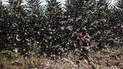 Locusts swarm Kenya