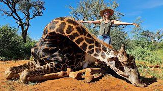 زن شکارچی در کنار جسد زرافه
