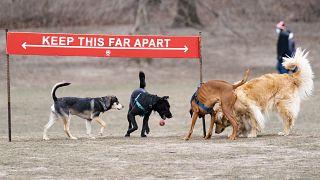 كلاب تقوم باللعب في إحدى الحدائق في نيويورك