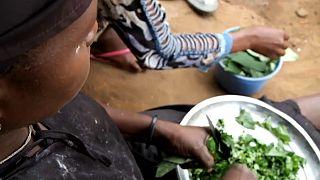 Mozambique : des déplacés bravent l'insécurité pour se nourrir