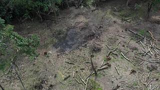 Kenya : des semences d'acacia pour régénérer les forêts ravagées