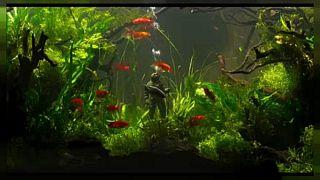 Aquarium Genoa reopens